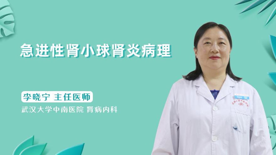 急进性肾小球肾炎病理