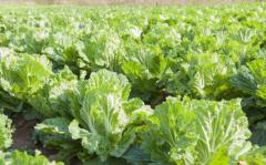 促进宝宝排便的蔬菜,7种